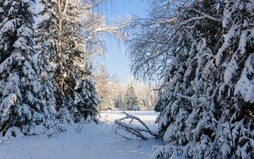 деревья, снег, природа, лес, зима, россия, урал