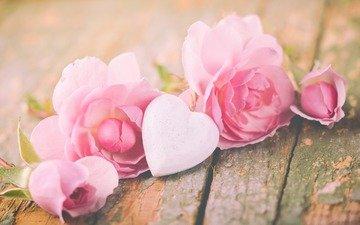 flowers, roses, heart, board