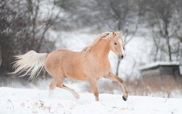 лошадь, снег, зима, конь, бег