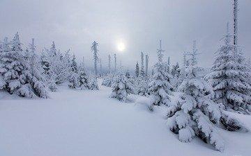 солнце, снег, природа, лес, зима, елки, дымка