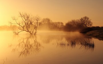 river, nature, landscape, morning, fog, dawn