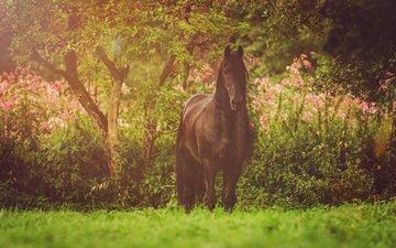 лошадь, природа, конь, грива, фриз