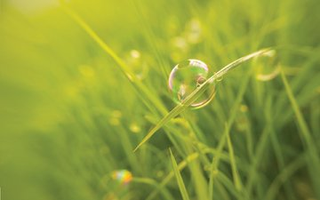 трава, макро, размытость, мыльный пузырь