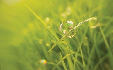 grass, macro, blur, bubble