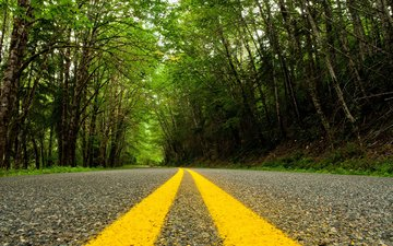 road, trees, nature, forest, landscape