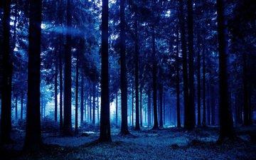 деревья, природа, лес, стволы, сумрак