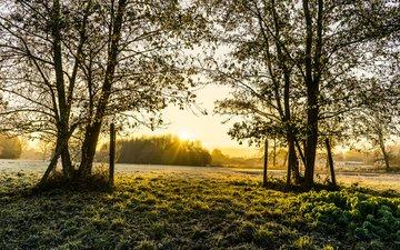 деревья, природа, пейзаж, поле, весна