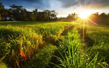 grass, the sun, nature, landscape, field, summer