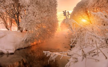trees, river, nature, winter, morning, dawn, frost