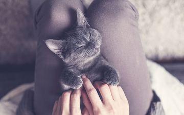 cat, kitty, legs, hands