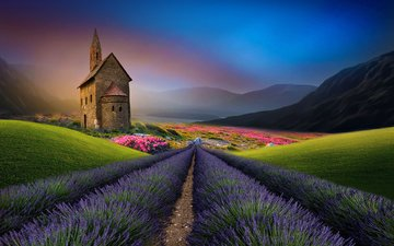 nature, landscape, field, lavender, castle, house