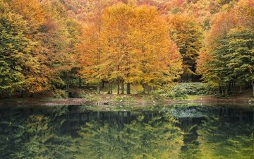 river, nature, forest, reflection, autumn