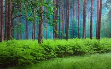 grass, trees, nature, plants, forest, trunks, the bushes, summer, fern