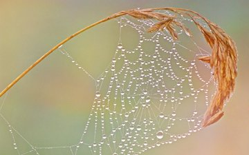 macro, drops, web, spike