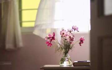 flowers, window, book, still life, kosmeya, bouquet.vase