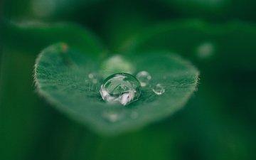 вода, макро, капли, капля, лист, растение, лист.капля
