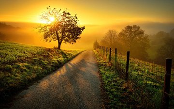 road, the sun, nature, tree, landscape, morning, dawn, the fence