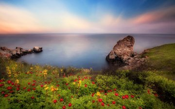 the sky, flowers, rocks, shore, landscape, sea