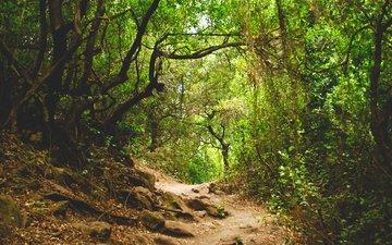 природа, лес, тропинка, джунгли
