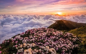 flowers, river, mountains, landscape, morning, fog, dawn, rhododendrons
