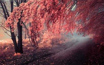 дорога, арт, деревья, лес, листья, пейзаж, осень