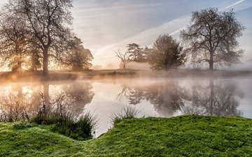 trees, river, nature, reflection, morning, fog