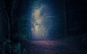 дорога, природа, лес, осень, сумрак