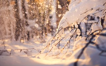 snow, nature, forest, winter, branches