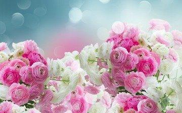 цветы, бутоны, лепестки, розовые, белые, лютики
