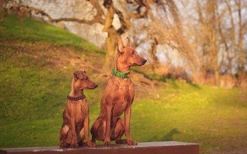 muzzle, look, puppy, collar, dogs, miniature pinscher