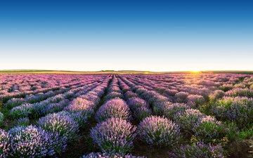 the sky, flowers, landscape, field, lavender, horizon
