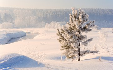 river, snow, nature, winter, russia, pine, ural