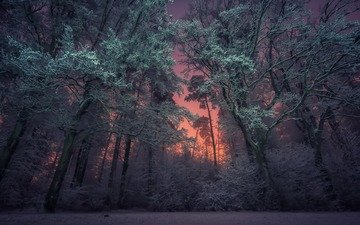 night, trees, nature, forest, winter