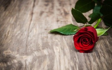 flower, rose, petals, bud, red rose, wooden surface