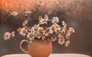 flowers, chamomile, bouquet, still life