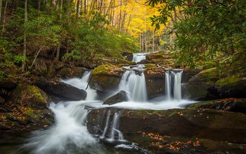 trees, water, river, nature, forest, waterfall, autumn, stream