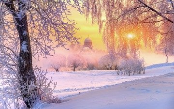 trees, nature, temple, winter, morning, frost