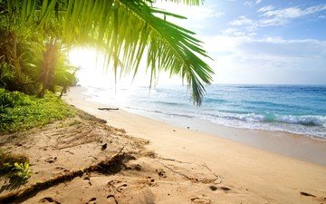 nature, landscape, sea, beach, palma, resort, tropics