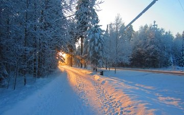 road, nature, forest, winter, morning