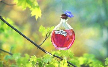 природа, фон, бутылочка, флакон, настойка, зелье, эликсир