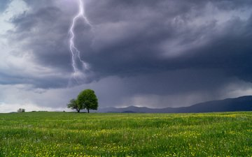 the sky, flowers, grass, tree, clouds, landscape, lightning, field, the storm