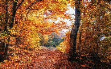 деревья, природа, лес, листва, осень