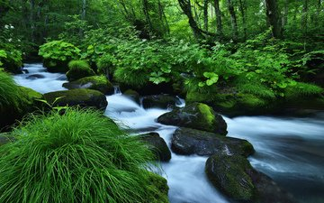 grass, river, nature, stones, forest, stream, moss