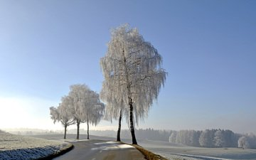 the sky, road, trees, nature, winter, frost