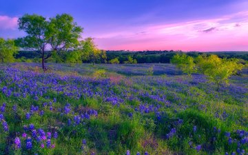 flowers, grass, nature, landscape, summer, meadow