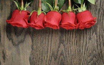 цветы, розы, букет, красные розы