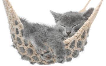 кот, мордочка, усы, кошка, сон, котенок, белый фон, гамак