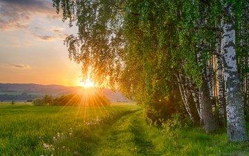 the sun, nature, forest, sunset, field, birch