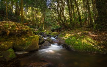 деревья, вода, река, природа, лес, ручей