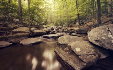 river, nature, stones, forest